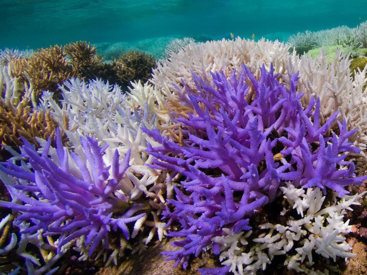 Coral reefs glow neon colors in an effort to survive