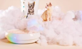 Pretty Litter Review: Keeping Tabs on Your Cat's Health
