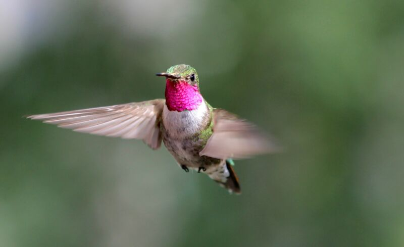 Experiments show hummingbirds see colors you've never dreamed of