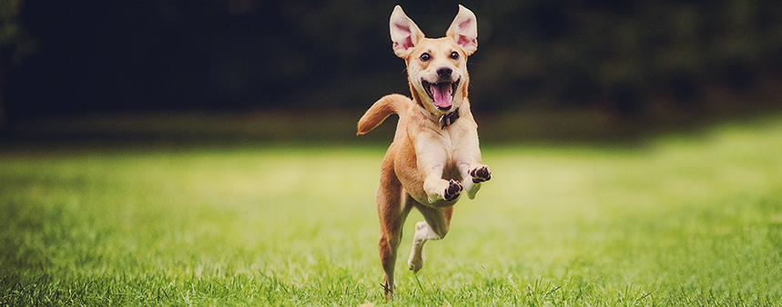 11 Low Cost Products Your Dog Will Love for 2020