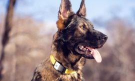 Last chance to save 34% when you protect your pup from getting lost with a Fi tracking collar