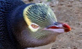 Torvalds warns the world: Don't use the Linux 5.12-rc1 kernel