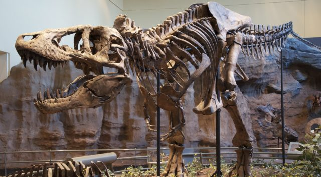 Researchers: 2.5 Billion Tyrannosaurus Rexes Walked the Earth