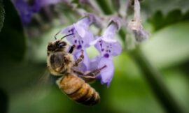 Solar farms could double as pollinator food supplies