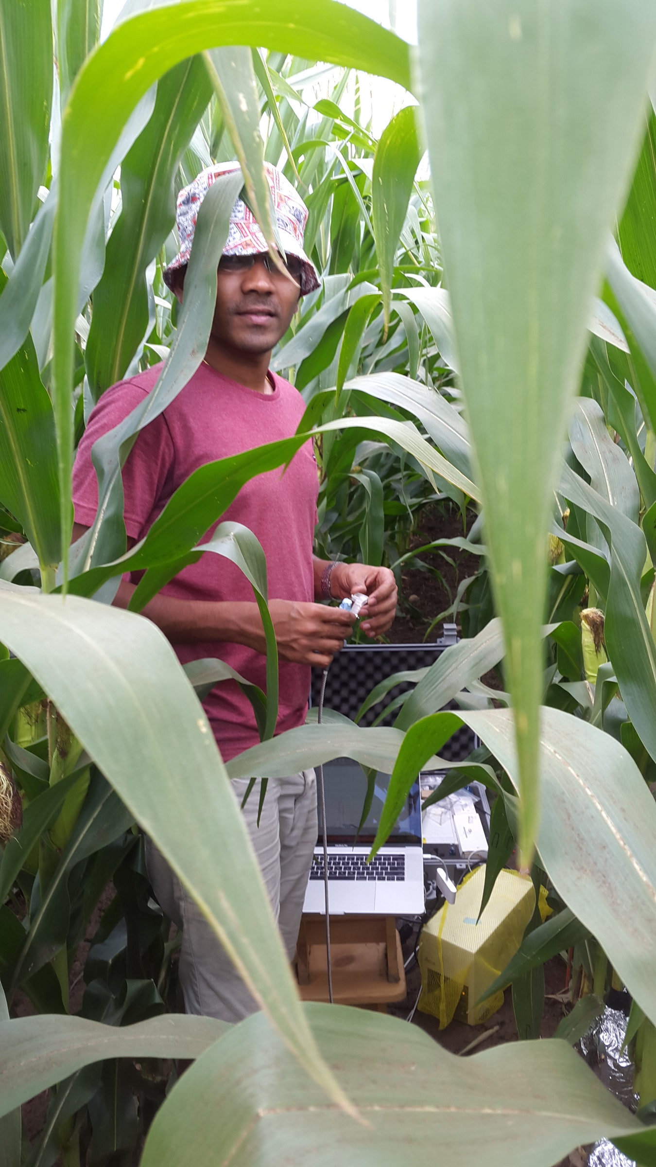 Read more about the article Which Crops Can Survive Drought? Nanosensors May Offer Clues