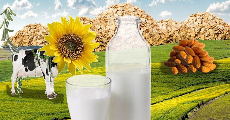 Read more about the article 4 tips for startups in the booming plant-based dairy market